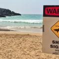 Sharkiest Surf Towns
