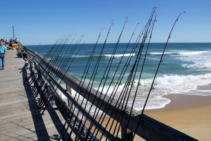 Outer Banks Fish and Fishing For Visitors