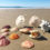 "Outer Banks Seashells: Secrets from the ""Shell Whisperer"""