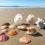 """Outer Banks Seashells: Secrets from the """"Shell Whisperer"""""""